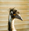Stock Image : The funny ostrich