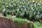 Stock Image : Garden