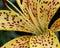 Stock Image : Garden flowers