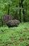 Stock Image : Garden Stone Sphere