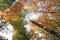 Stock Image : Gekleurde kronen