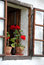 Stock Image : Geranium plants on windowsill