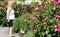 Stock Image : Giant hibiscus