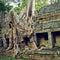 Stock Image : Giant tree шт Siem Reap