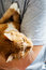 Ginger cat lies on man's hands. The fluffy pet comfortably settl