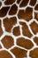 Stock Image : Giraffe pattern