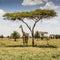 Stock Image : Giraffe in Tanzania