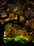 Stock Image : Glorious Japanese maple tree