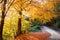 Stock Image : Golden autumn path