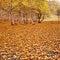Stock Image : The golden fallen leaves