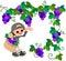 Stock Image : Grape Picking