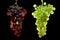 Stock Image : Grapes vine three