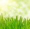 Stock Image : Grass  on bokeh  background