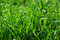 Stock Image : Grass