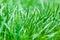 Stock Image : Grass water drop