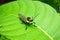Stock Image : Grasshopper on green leaf