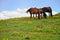 Stock Image : Grazing horses