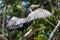 Stock Image : Great Cormorant(Phalacrocorax carbo)