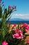 Stock Image : Greek flowers