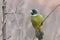 Stock Image : A green bird