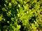 Stock Image : Green bush close up