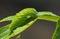 Stock Image : Green caterpillar