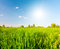 Stock Image : Green field under blue sky with sun