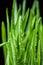 Stock Image : Green grass