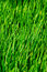 Stock Image : Green grass background