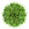 Stock Image : Green grass ball