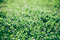 Stock Image : Green grass field
