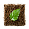Stock Image : Green leave on a piece of soil