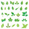 Stock Image : Green leaves