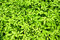Stock Image : Green leaves texture