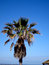 Stock Image : Green palm tree on blue sky background