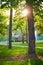 Green park trees sun