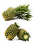 Stock Image : Green Pineapple