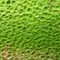 Stock Image : Green pit surface lichen