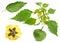 Stock Image : Green raw physalis