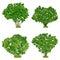 Stock Image : Green shrubs vector set