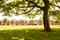 Stock Image : Green trees in park and sunlight