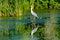 Stock Image : Grey Heron