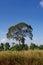 Stock Image :  Großer Baum auf dem Gebiet