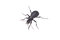 Stock Image : Ground beetle