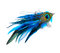 Stock Image : Peacock hair accessory