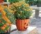 Stock Image : Halloween Pumpkin Mums