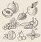 Stock Image : Hand drawn fruit