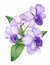 Stock Image : Hand-drawn lilac orchid branch