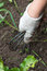 Stock Image : The hand holding the gardening tool