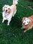 Stock Image : Happy Dogs